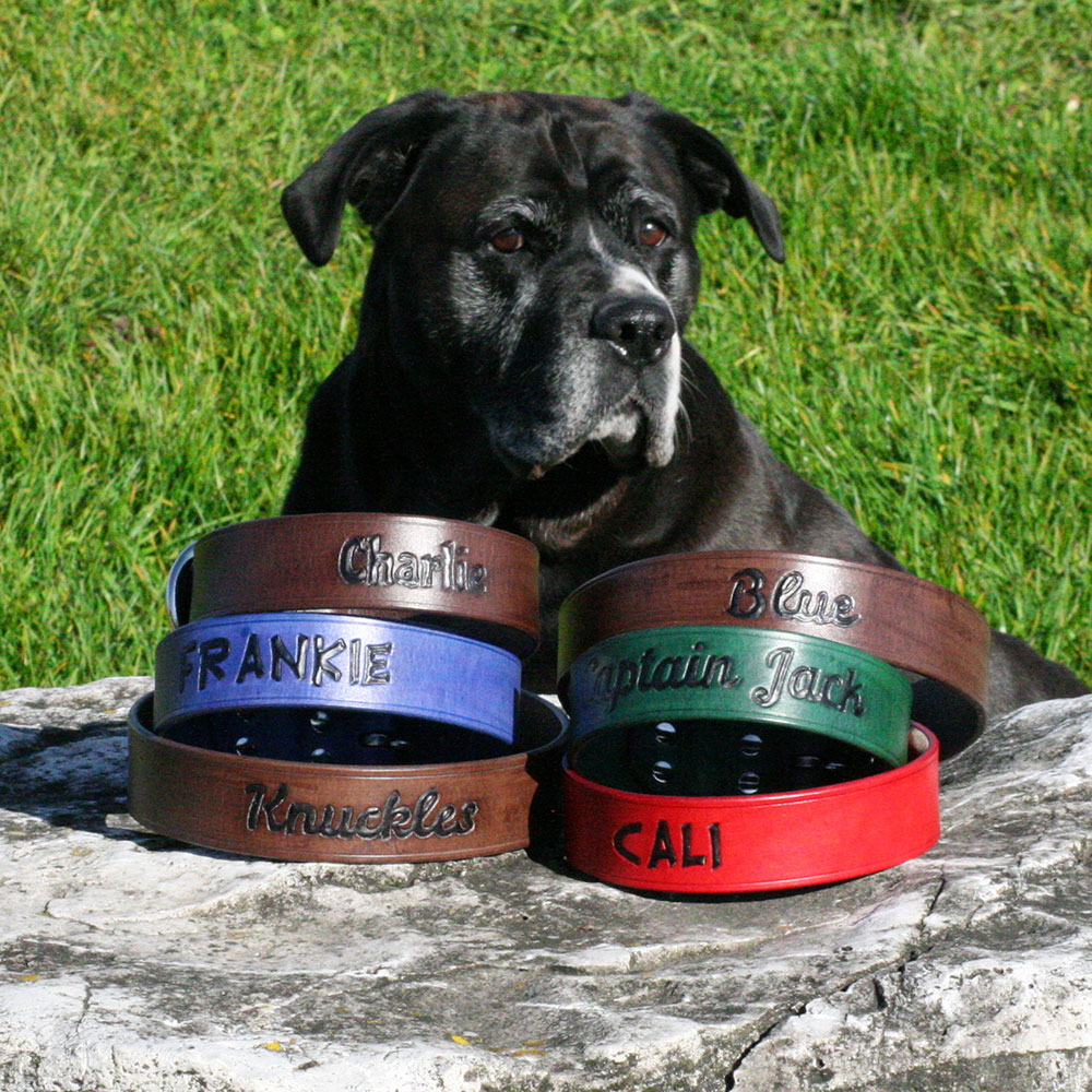 Dog with collars